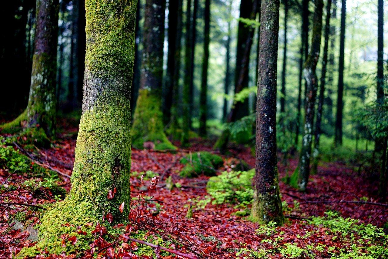 trees 1365632 1280